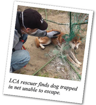 LCA rescuer finds dog trapped in net unable to escape.
