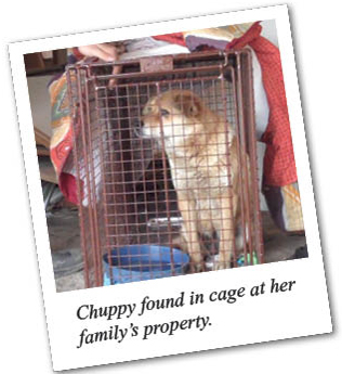 Chuppy found in cage at her family's property.