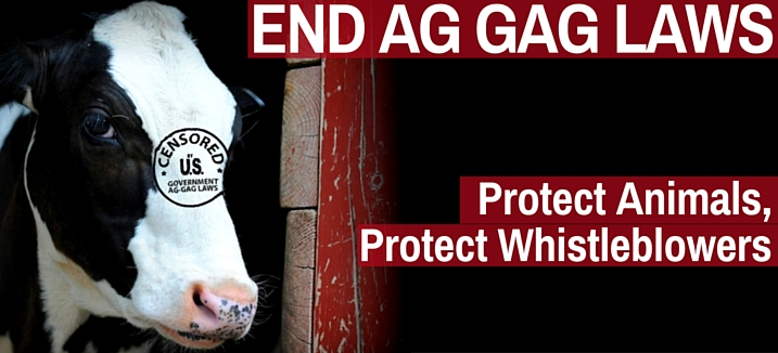 end aggag cow