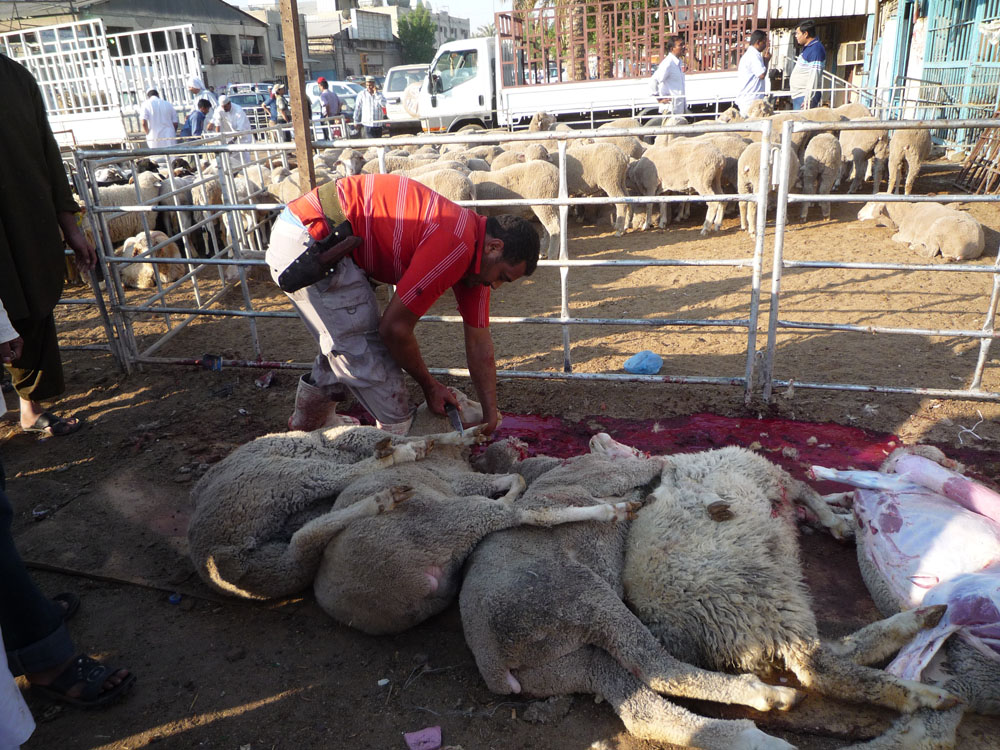 Sheep have their throats cut while fully conscious and then are skinned on the spot in Kuwait slaughter yard (Photo: Animals Australia)