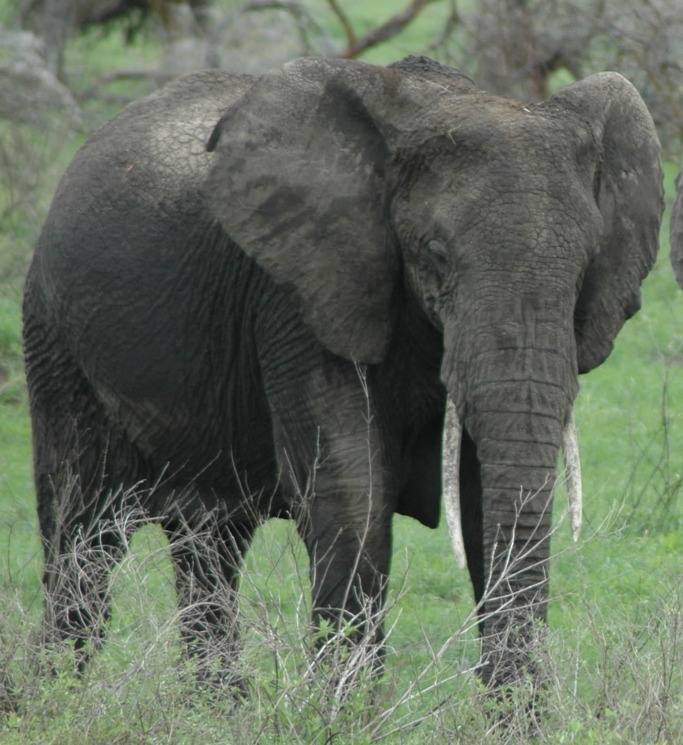 elephants expert quotes