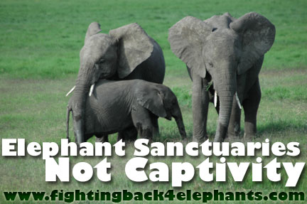 Elephant Sanctuaries, Not Captivity