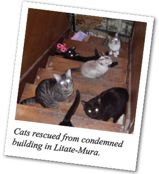 Cats rescued from condemned building in Litate-Mura.