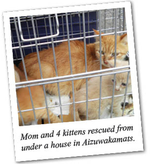 Mom and 4 kittens rescued from under a house in Aizuwakamats.