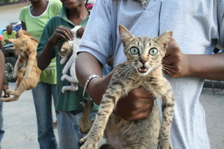 haiti cat 001 credit-WSPA-IFAW