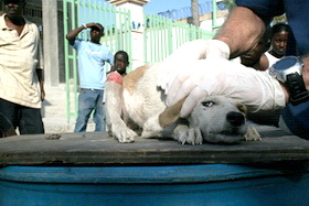haiti dog 005 credit-WSPA-IFAW