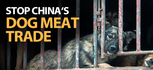 China dog meat joomla article banner