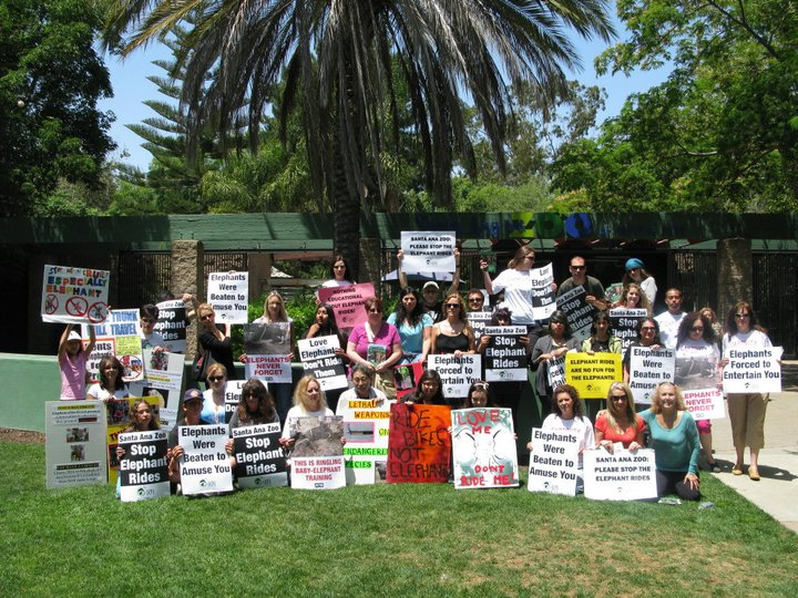 A dedicated group of regular protesters in front of the Santa Ana Zoo