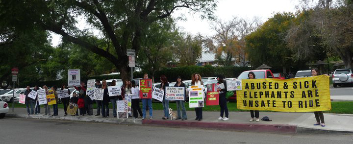 One of the many public protests against elephant rides at the Santa Ana Zoo