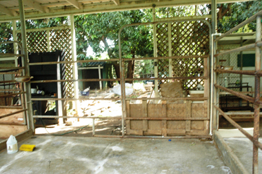 The abandoned Waimanalo property owned by Sheryl-Luke Kalani where Bradley Hawaiian Puppies operated the puppy mill and where Luke-Kalani got puppies to sell at her pet shop