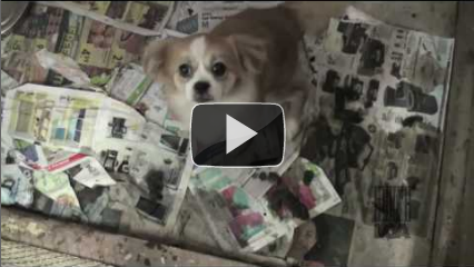 Watch LCA's undercover tage inside the puppy mill