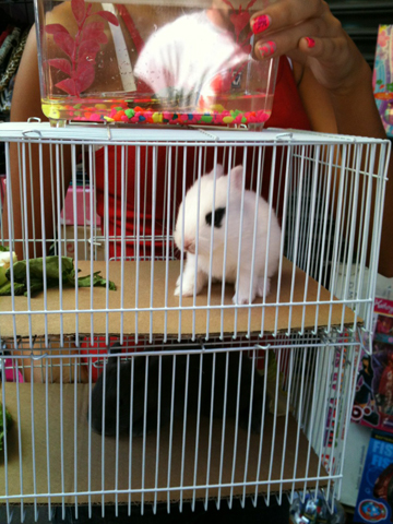 Baby bunny being sold illegally at Santee Alley