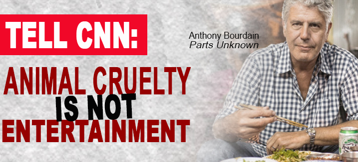 tell cnn carousel bourdain