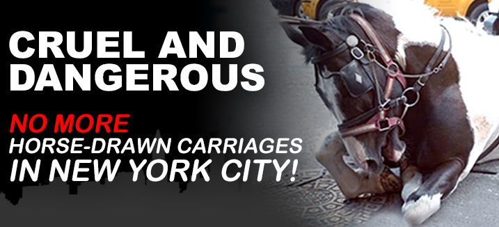 nyclass carousel banner