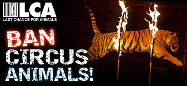 L.A. - Protest Ringling Bros. Animal Cruelty July 14-19, 2016 at Staples Center!!