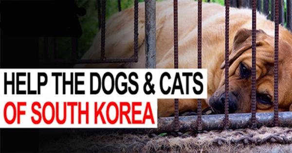 LCA Educating the Public on Cruel Dog Meat Trade at LA Korean Festival Thurs. 9/22/16 - Sun. 9/25/16
