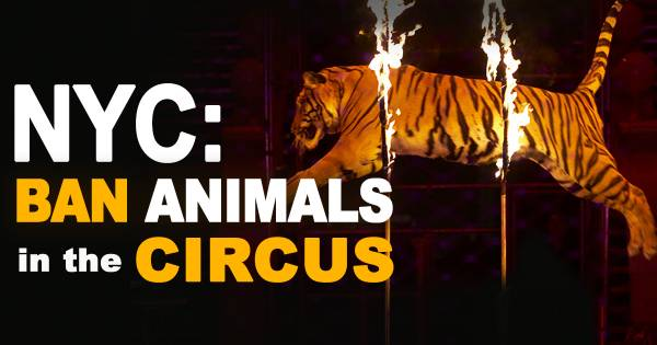 Speak Up to Pass NYC Circus Animal Ban! Rally and Council Hearing 10/20/16!!