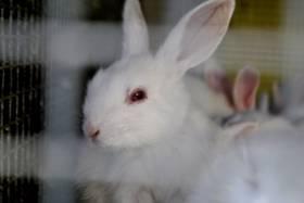 The Rabbit Industry's Dirty Secret