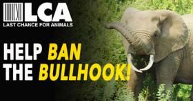 California - Elephants Need You!! Help Ban the Elephant Bullhook in CA!!