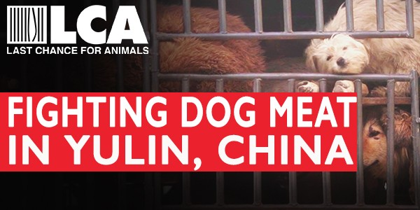 LCA is On The Ground RIGHT NOW Fighting the Yulin Dog Meat Festival