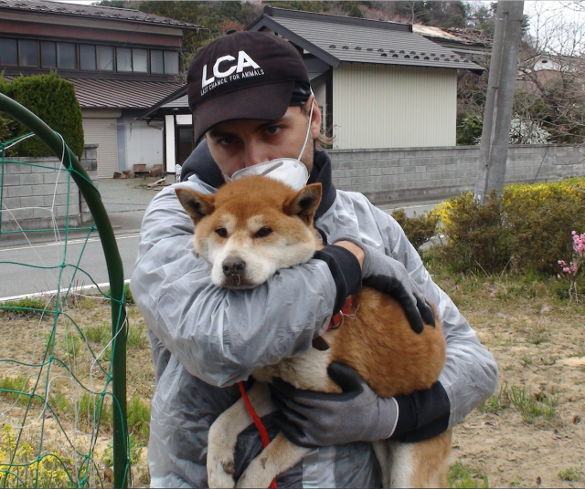Anniversary of Japan's Earthquake, Tsunami and Nuclear Disaster - A Look Back at LCA's Animal Rescue