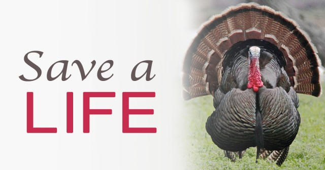 Have a Compassionate Thanksgiving -  This Year and Every Year!!