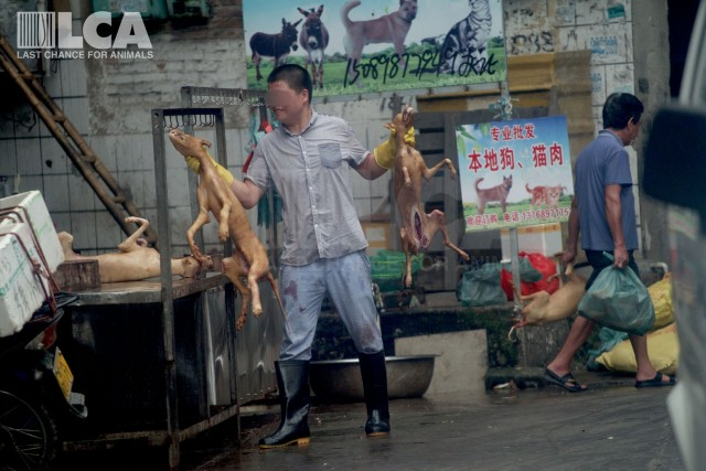 Another Year of Terror – But Fresh Hope – at the Yulin Dog Meat Festival