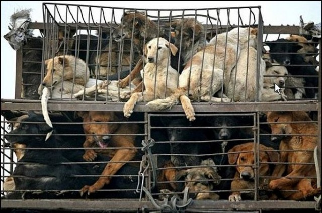 Let's End the Yulin Dog Meat Festival