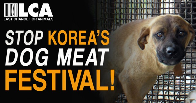 Help Stop Korea's 'Bok Nal' Dog Meat Festival!! Set for Tuesday, August 16, 2016!